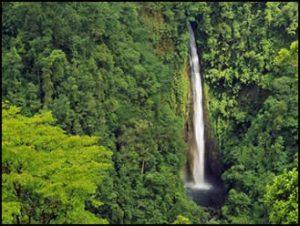 rainforest-lapaz